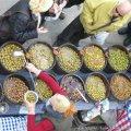 Festa Vi Jove i Oli Novell a Sant Jaume dels Domenys
