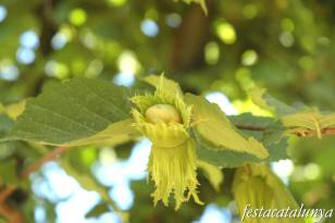 Brunyola - Fira de l'Avellana