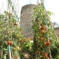 Castell de l'Ametlla de Segarra a Montoliu de Segarra ***