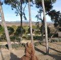 Zona de pícnic dels pins de cal Ferret