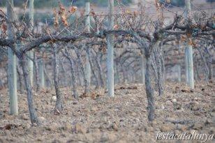 Sant Llorenç d'Hortons - Terme municipal, vinyes i ceps