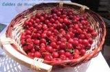 Jornades Gastron�miques de les Cireres a Caldes de Montbui