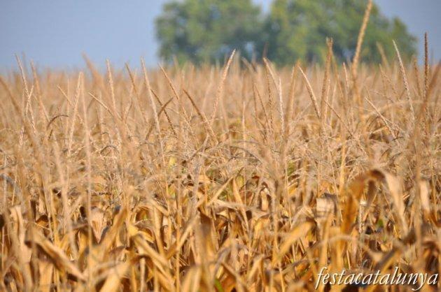 Barbens - Terres de conreu