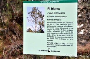 Montmell, El - Àrea Recreativa Forestal del Montmell