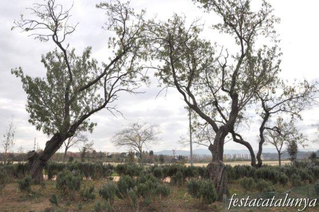 Barberà del Vallès - Parc Central del Vallès