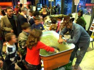 Barcelona - Mineralexpo Barcelona Sants (Foto: Grup Mineralògic Català)