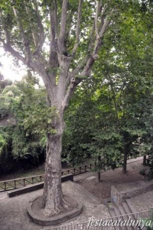 Taradell - Font Gran (Plàtan centenari)