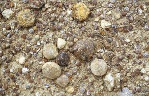 Carme - Fòssil