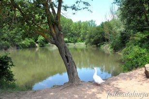 Moià - Embassament i Parc del Molí Nou