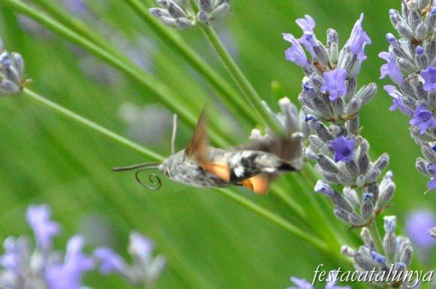 Moià - Mirador de la Creu i Jardí Botànic de cal Riera