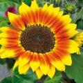Fira Verd de Carme, la fira de la floristeria i la jardineria