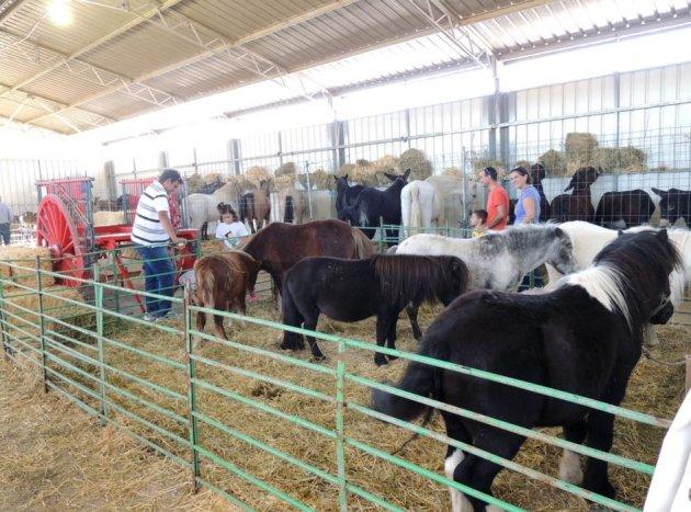 Móra La Nova - Fira Agrícola, Ramadera i Industrial (Foto: Ajuntament de Móra La Nova)