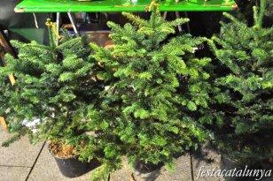 Maçanet de la Selva - Nadal