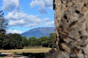 Llinars del Vallès - Can Colomer (Roure monumental)