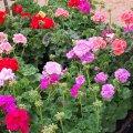 Fira de la Flor i el Planter a Salt