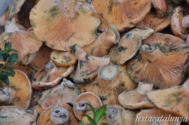 Montseny - Cap de Setmana del Bolet i la Gastronomía