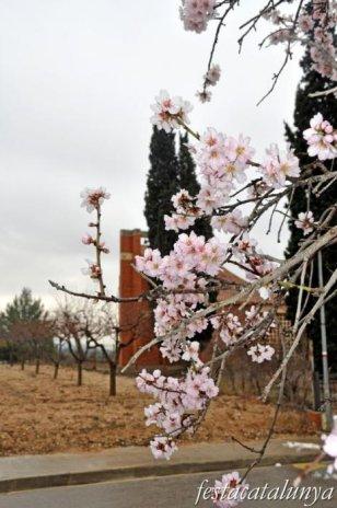 Piera - Sant Sebastià del Bedorc