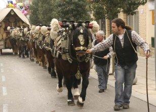 Sant Quirze del Vallès - Passada de Sant Antoni Abat (Foto: Ajuntament de Sant Quirze del Vallès)