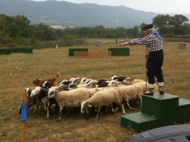 Castellterçol - Concurs Gossos d'Atura (Foto: Ajuntament de Castellterçol)