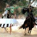 Festivals i mostres