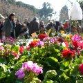Fira de l'Arbre i el Medi Ambient de Mataró