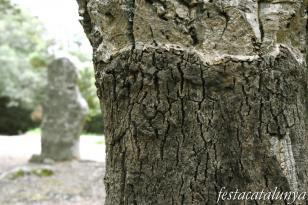 Maçanet de Cabrenys - Menhir de la Pedra Dreta