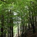 Espai natural del massís de les Salines a Maçanet de Cabrenys ***