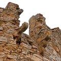 Torre de can Marquès