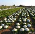 Plana Agrícola