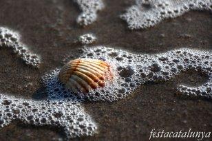 Viladecans - Platja de la Pineda de cal Francès