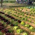 Espai Agroambiental de Viladecans