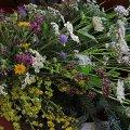 Concurs de Rams de Flors de Muntanya i Concurs de Fotografia de Flora de Cerdanya a Llívia