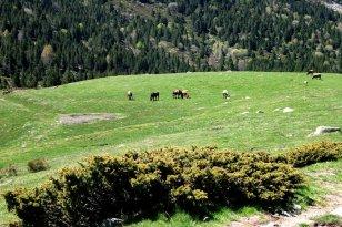 Llívia - Les Bulloses (Foto: Ajuntament de Llívia)