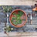 Jornada Gastronòmica de les Plantes Oblidades a Igualada
