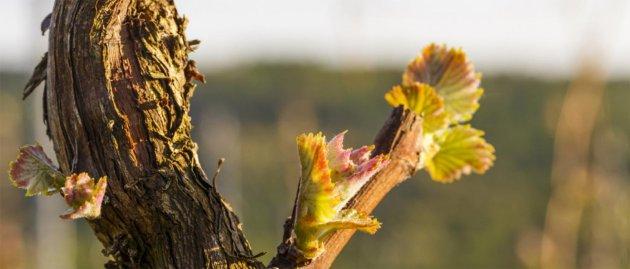 La Primavera del Cava