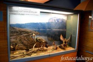 Sant Hilari Sacalm - Museu de les Guilleries