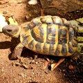 Centre d'Interpretació i reproducció de la tortuga mediterrània a Marçà