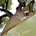 Arboretum de Vidrà