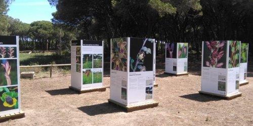 Viladecans - Visita guiada i Exposició d'Orquídies a la Pineda del Remolar (Foto: Ajuntament de Viladecans)