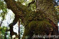 Espinelves - Arboretum de Masjoan - Alzina Surera