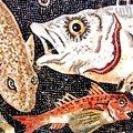 Activitats del Museu de la Pesca de Palamós