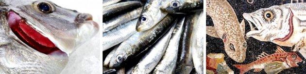 Palamós - Activitats del Museu de la Pesca