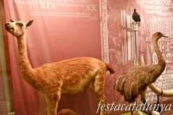 Banyoles - Museu Darder