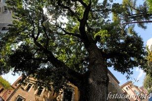 La Garriga - Passeig dels Til·lers i entorn - Roure de l'Hostal