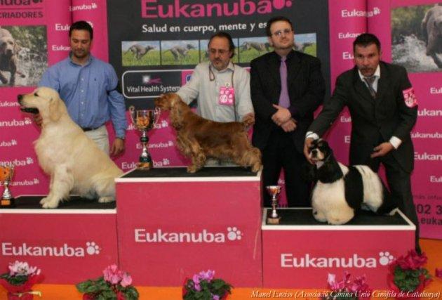 Girona - Expocanina (Foto: Manel Enciso - Associació Canina Unió Cinòfila de Catalunya)