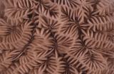 Exposició -Coralls: indicadors del canvi climàtic- a Banyoles