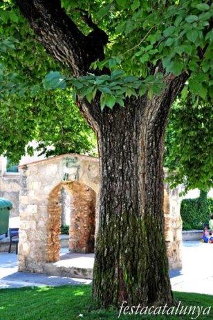 Banyeres del Penedès - Om Centenari