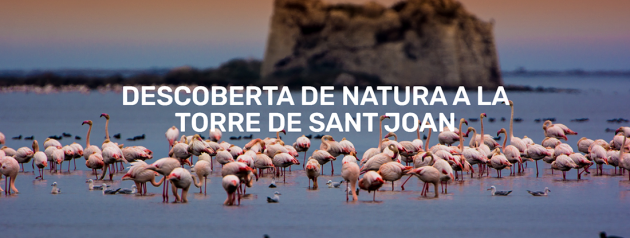 Amposta - Descoberta de natura a la Torre de Sant Joan