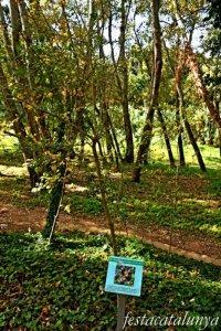 Vila-rodona - L'Albereda