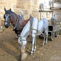 Grup escultòric Els Picapedrers de Castellet ***